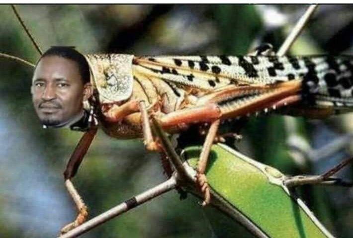 A Mwangi Kiunjuri Meme mocking his inability to contain locust invasion of Kenyan farms when he was then the agriculture minister.